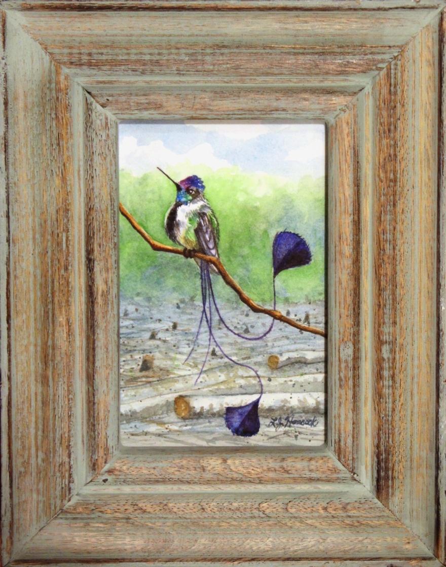 spatulatailedhummingbird