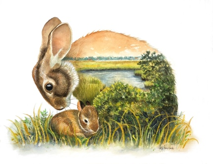 Marsh Rabbit (SOLD) Prints Available