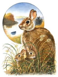 Rabbits in the Marsh