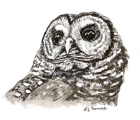 Northern Spotted Owl2